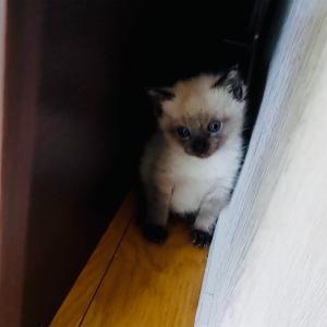 野良猫の親子を保護し、新しく家族に迎え入れることにしました