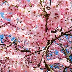 【不登校】春休みが終わる・・・