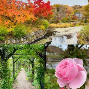 秋の軽井沢レイクガーデンは秋バラと紅葉で哀愁漂う庭園に