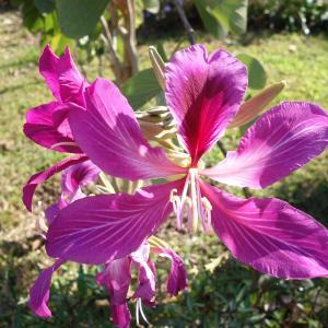 ユニークな植物たち No13
