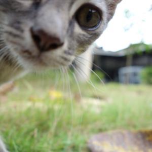 元気いっぱいなネコちゃん