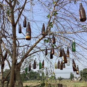 酒のなる木?