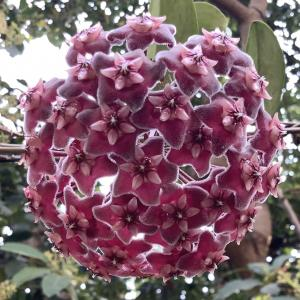 なんだろうこの花は? 夏の大空に上がる花火のようだ・・・