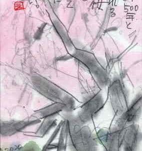 奥迫川 大山桜