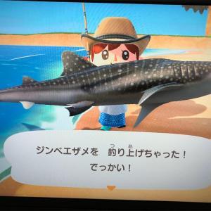 【あつまれどうぶつの森】夏ですね!サメ解禁ですよ〜