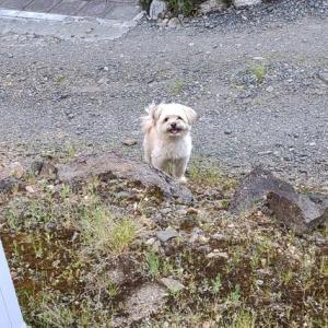 人外勢の躍進と犬は犬とFANBOX仮稼働のお知らせ