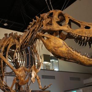 関東の恐竜王国 ~ 恐竜センター ~