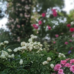 The Natural Gardens ~ プライベートガーデン ~