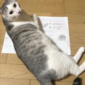 猫が庇う算数