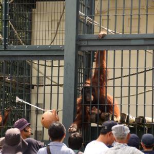 SFC修行#5.5(観光編)北海道観光もいろいろあるけど、旭山動物園に美瑛はどうでしょ。