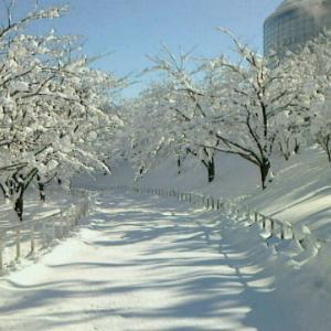 アーリーリタイアしてから雪や寒さがあまり気にならなくなったのはうれしいが、子供の教育的にはまずいかも、という話。