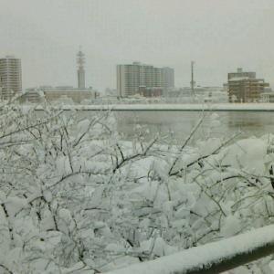 雪! 雪! 雪! 地元は3年振りの大雪となった。