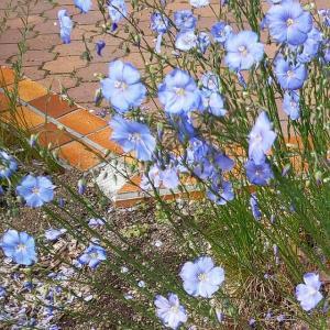 「人造才子」に花束を ―ダニエル・キイス『アルジャーノンに花束を』―