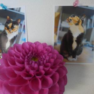 写真に花を供える