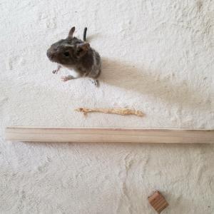 チョビが武器を作ってましたw