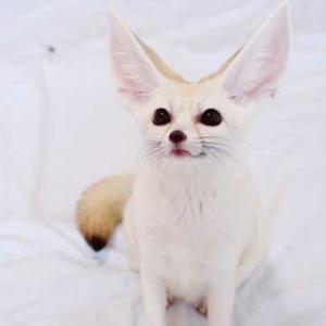 よく立つ猫ちゃんに続く「よく立つキツネ」さん現る!高貴なオーラ漂う立ち姿