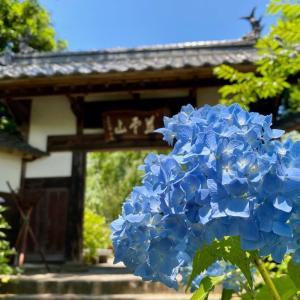 仙台・資福寺の紫陽花