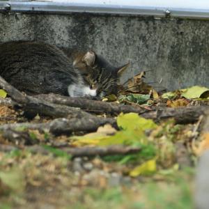 スタジアム裏の猫たち