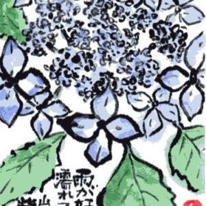 クロヒメアジサイ(絵手紙)