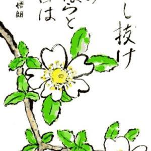野ばら(絵手紙)