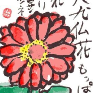 百日草(絵手紙)