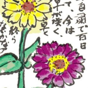 百日草(その2)(絵手紙)