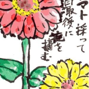 百日草(その3)(絵手紙)