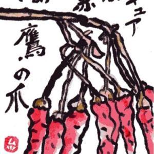 シシトウガラシ(絵手紙)