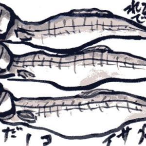 子持ちシシャモ(絵手紙)