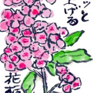 ベニバナトチノキ(絵手紙)