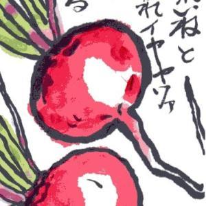 赤丸二十日大根(絵手紙)