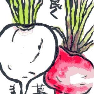 蕪と赤カブの密(絵手紙)
