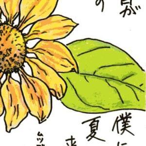夏はヒマワリ(絵手紙)