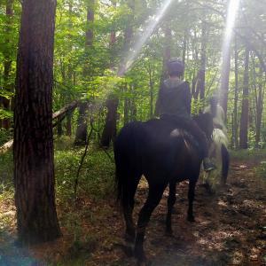 乗馬体験🐴