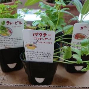 ハーブ苗の選び方と植え替え 毎日ご飯