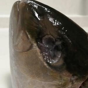 突然変異?奇形?三つ眼の魚刺身にしました「中二病のショッキングクッキング」