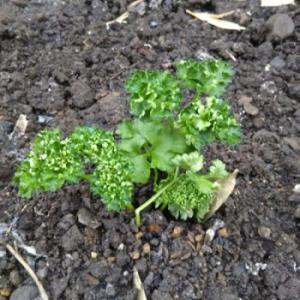 ニートの野菜作りは節約から始まる