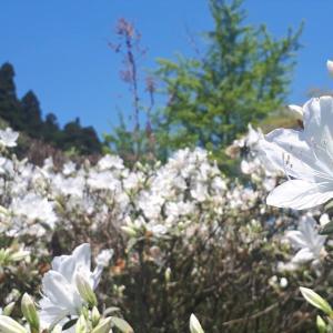 【76日目】竹&たけのこ狩り!燕を見ると春を感じるの巻【画像多め】