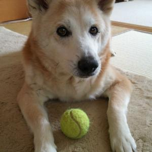 トピナン家族生活(菊芋と犬)