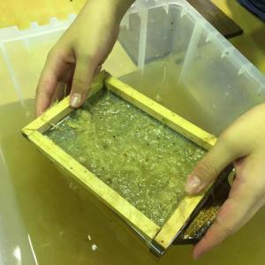 クワの樹皮から作る和紙