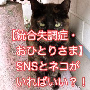 【おひとりさまが加速しそうな予感;】SNSとネコがいればいいかもしれないと思った。