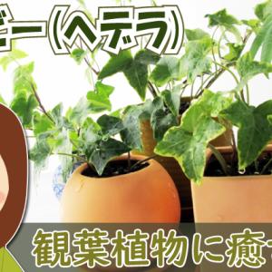 北国でも育つおすすめ観葉植物【耐寒性】