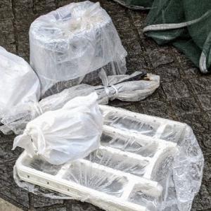 世の中にゴミ捨てができる夫はどのくらいいるだろう。