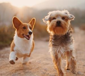 世界のおもしろ犬動画・gifまとめ 100選【爆笑・癒し・かわいい犬がいっぱい!】