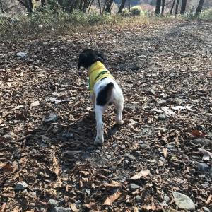 中型猟犬子犬時期の運動量