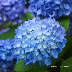 大好きな花ってありますか?