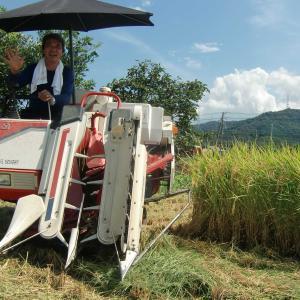 台風前に今年は稲刈り