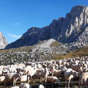 ジャウ峠→コルティナ・ダンペッツォ Passo Giau, Cortina d'Ampezzo