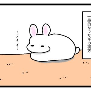 欲望まみれなウサギ