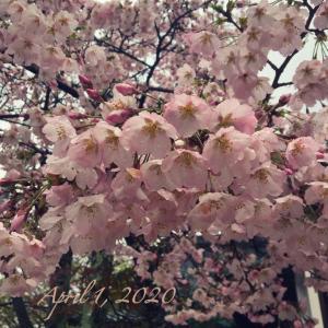 それでも、綺麗に咲く花…